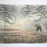 björn_1600x1128