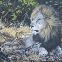 konungen i Ngorongoro_1024x675