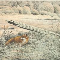 räv i frostigt landskap_1600x1164